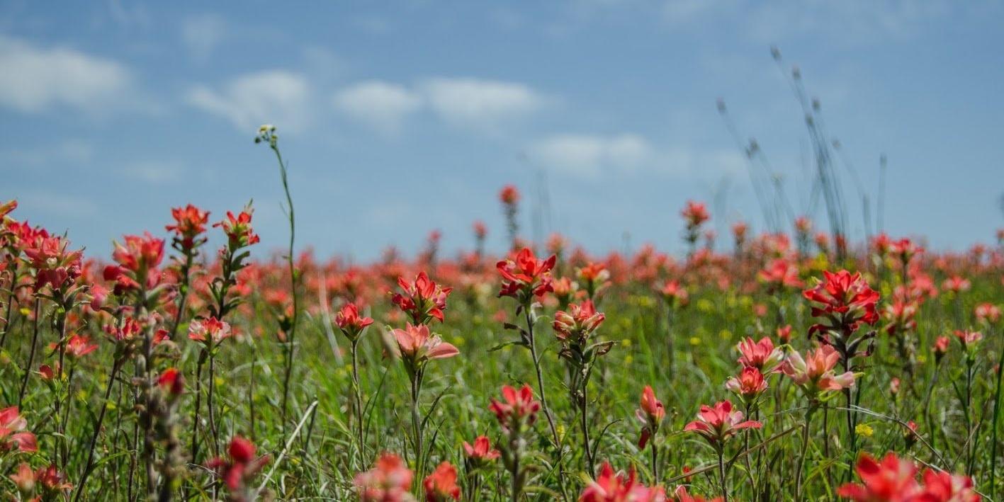 Flowers-167361-edited