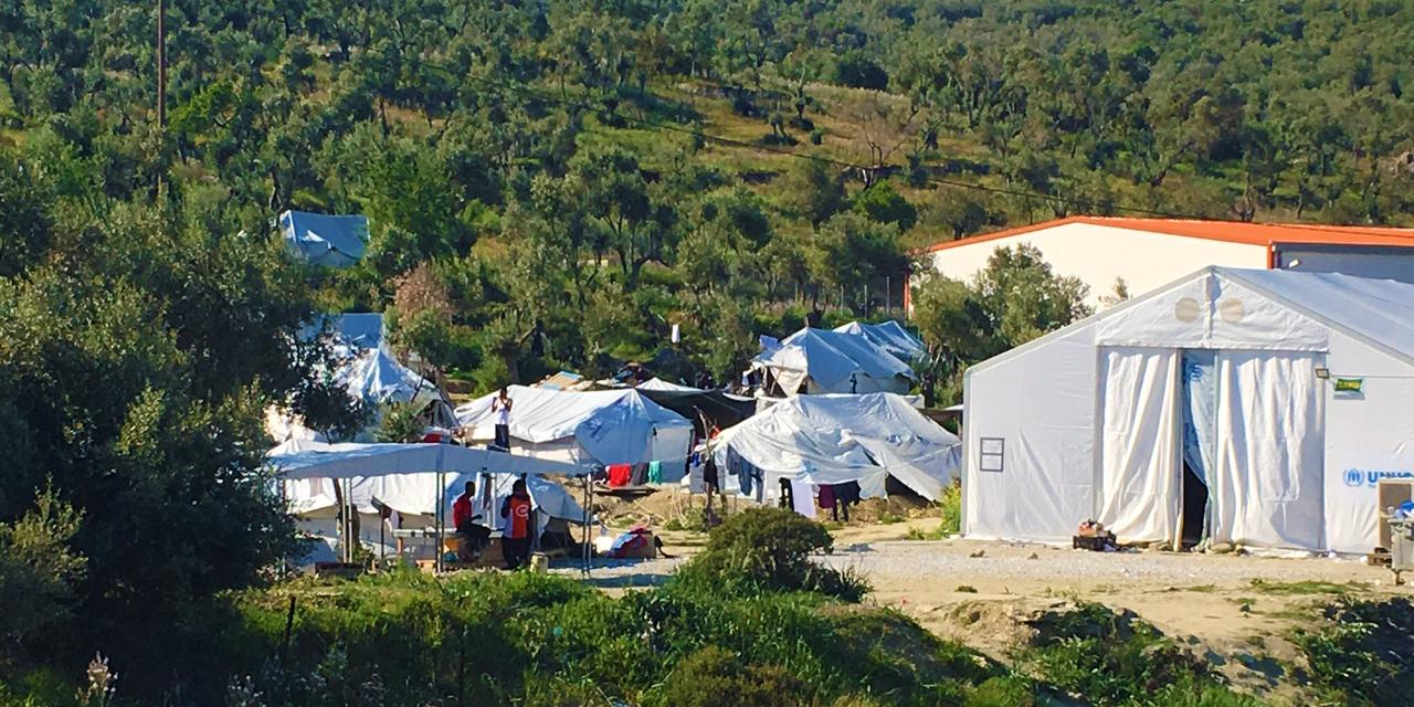 Olive Grove, Camp Moria, Lesbos, Greece
